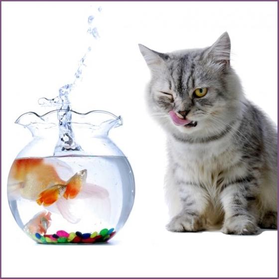 Лакомства для кошек