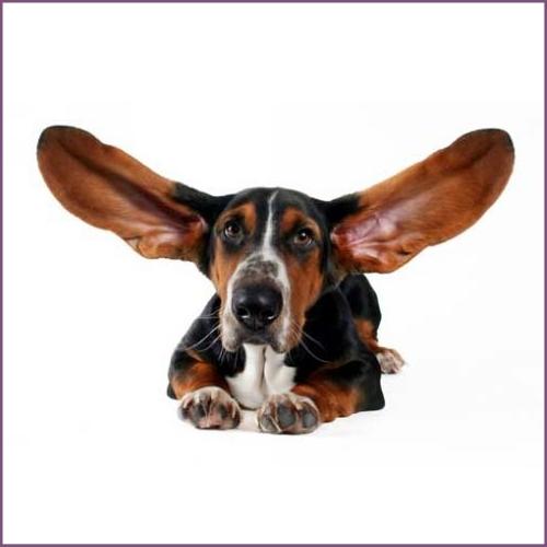 Препараты для лечения ушей