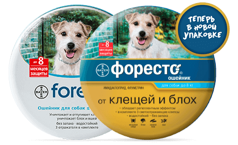 foresto-dogs